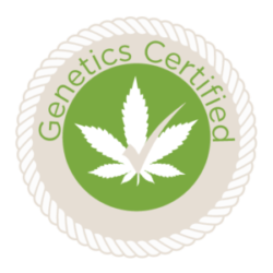 cannabis seeds for sale in canada