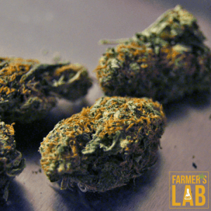 Cannabis Seeds Shipped Directly to Your Door in Albertville, AL. Farmers Lab Seeds is your #1 supplier to growing Cannabis in Albertville, Alabama.