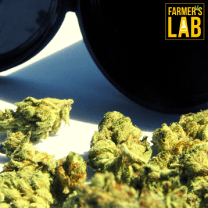 Cannabis Seeds Shipped Directly to Your Door in Atchison, KS. Farmers Lab Seeds is your #1 supplier to growing Cannabis in Atchison, Kansas.