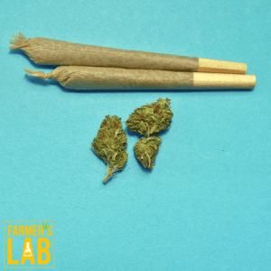 Cannabis Seeds Shipped Directly to Your Door in August, CA. Farmers Lab Seeds is your #1 supplier to growing Cannabis in August, California.