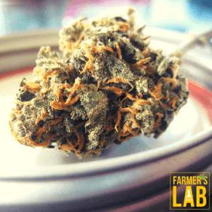 Cannabis Seeds Shipped Directly to Your Door in Bloomington, IN. Farmers Lab Seeds is your #1 supplier to growing Cannabis in Bloomington, Indiana.