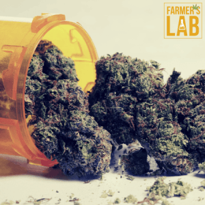Cannabis Seeds Shipped Directly to Your Door in Charlottesville, VA. Farmers Lab Seeds is your #1 supplier to growing Cannabis in Charlottesville, Virginia.