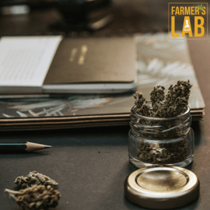 Cannabis Seeds Shipped Directly to Your Door in Eagle Mountain, UT. Farmers Lab Seeds is your #1 supplier to growing Cannabis in Eagle Mountain, Utah.