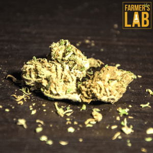 Cannabis Seeds Shipped Directly to Your Door in Fort Scott, KS. Farmers Lab Seeds is your #1 supplier to growing Cannabis in Fort Scott, Kansas.
