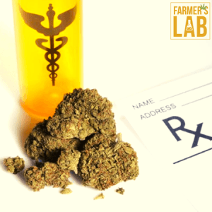 Cannabis Seeds Shipped Directly to Your Door in Fortuna, CA. Farmers Lab Seeds is your #1 supplier to growing Cannabis in Fortuna, California.