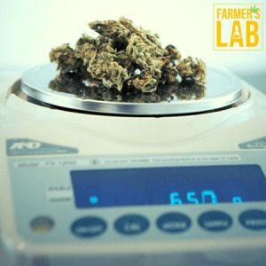 Cannabis Seeds Shipped Directly to Your Door in Grants Pass, OR. Farmers Lab Seeds is your #1 supplier to growing Cannabis in Grants Pass, Oregon.