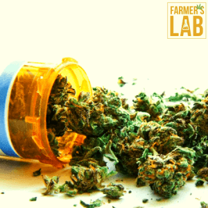Cannabis Seeds Shipped Directly to Your Door in Green, OR. Farmers Lab Seeds is your #1 supplier to growing Cannabis in Green, Oregon.