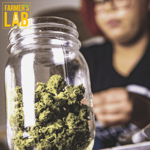 Cannabis Seeds Shipped Directly to Your Door in Gresham, OR. Farmers Lab Seeds is your #1 supplier to growing Cannabis in Gresham, Oregon.