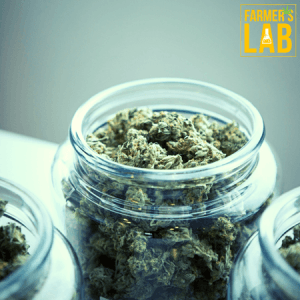 Cannabis Seeds Shipped Directly to Your Door in Kansas City, KS. Farmers Lab Seeds is your #1 supplier to growing Cannabis in Kansas City, Kansas.