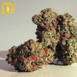 Cannabis Seeds Shipped Directly to Your Door in Manhattan, KS. Farmers Lab Seeds is your #1 supplier to growing Cannabis in Manhattan, Kansas.
