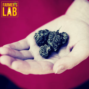 Cannabis Seeds Shipped Directly to Your Door in Murray, UT. Farmers Lab Seeds is your #1 supplier to growing Cannabis in Murray, Utah.