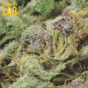 Cannabis Seeds Shipped Directly to Your Door in Salina, KS. Farmers Lab Seeds is your #1 supplier to growing Cannabis in Salina, Kansas.