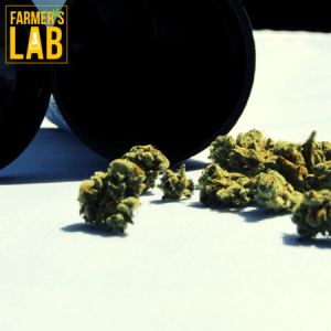 Cannabis Seeds Shipped Directly to Your Door in Smiths-Salem, AL. Farmers Lab Seeds is your #1 supplier to growing Cannabis in Smiths-Salem, Alabama.
