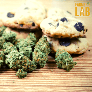 Cannabis Seeds Shipped Directly to Your Door in Spanish Fork, UT. Farmers Lab Seeds is your #1 supplier to growing Cannabis in Spanish Fork, Utah.