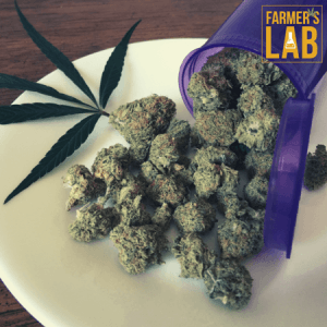 Cannabis Seeds Shipped Directly to Your Door in Talladega, AL. Farmers Lab Seeds is your #1 supplier to growing Cannabis in Talladega, Alabama.