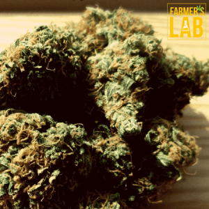 Cannabis Seeds Shipped Directly to Your Door in Village of Oak Creek (Big Park), AZ. Farmers Lab Seeds is your #1 supplier to growing Cannabis in Village of Oak Creek (Big Park), Arizona.