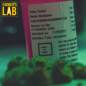 Cannabis Seeds Shipped Directly to Your Door in Washington Terrace, UT. Farmers Lab Seeds is your #1 supplier to growing Cannabis in Washington Terrace, Utah.