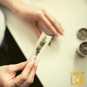 Cannabis Seeds Shipped Directly to Your Door in West Point, UT. Farmers Lab Seeds is your #1 supplier to growing Cannabis in West Point, Utah.