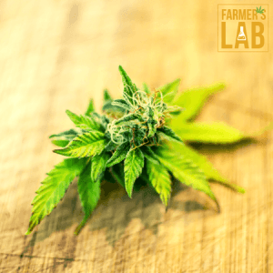 Cannabis Seeds Shipped Directly to Your Door. Farmers Lab Seeds is your #1 supplier to growing Cannabis in Wyoming.