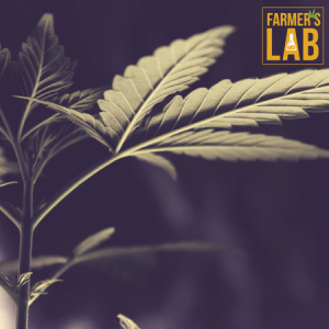 Marijuana Seeds Shipped Directly to Ambler, PA. Farmers Lab Seeds is your #1 supplier to growing Marijuana in Ambler, Pennsylvania.