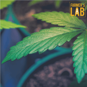 Marijuana Seeds Shipped Directly to Your Door. Farmers Lab Seeds is your #1 supplier to growing Marijuana in Arkansas.