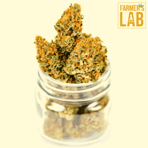 Marijuana Seeds Shipped Directly to August, CA. Farmers Lab Seeds is your #1 supplier to growing Marijuana in August, California.