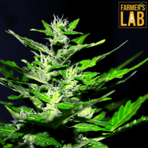 Marijuana Seeds Shipped Directly to Brownsburg-Chatham, QC. Farmers Lab Seeds is your #1 supplier to growing Marijuana in Brownsburg-Chatham, Quebec.