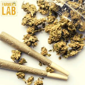 Marijuana Seeds Shipped Directly to Caledon, ON. Farmers Lab Seeds is your #1 supplier to growing Marijuana in Caledon, Ontario.