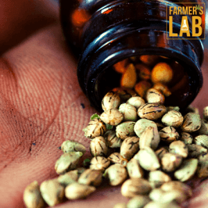 Marijuana Seeds Shipped Directly to Chibougamau, QC. Farmers Lab Seeds is your #1 supplier to growing Marijuana in Chibougamau, Quebec.