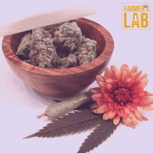 Marijuana Seeds Shipped Directly to Forestville, QC. Farmers Lab Seeds is your #1 supplier to growing Marijuana in Forestville, Quebec.