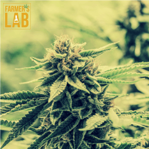 Marijuana Seeds Shipped Directly to Kingston, ON. Farmers Lab Seeds is your #1 supplier to growing Marijuana in Kingston, Ontario.