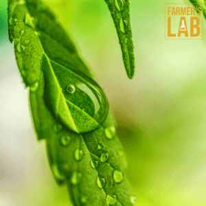 Marijuana Seeds Shipped Directly to Your Door. Farmers Lab Seeds is your #1 supplier to growing Marijuana in New Jersey.