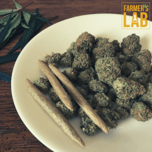 Marijuana Seeds Shipped Directly to Your Door. Farmers Lab Seeds is your #1 supplier to growing Marijuana in New York.