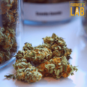 Marijuana Seeds Shipped Directly to North Bay, ON. Farmers Lab Seeds is your #1 supplier to growing Marijuana in North Bay, Ontario.
