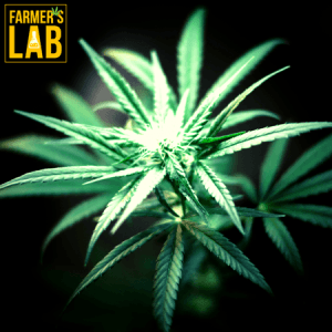 Marijuana Seeds Shipped Directly to Overland Park, KS. Farmers Lab Seeds is your #1 supplier to growing Marijuana in Overland Park, Kansas.