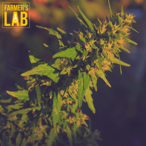 Marijuana Seeds Shipped Directly to Prince Edward County, ON. Farmers Lab Seeds is your #1 supplier to growing Marijuana in Prince Edward County, Ontario.