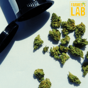 Marijuana Seeds Shipped Directly to Quinte West, ON. Farmers Lab Seeds is your #1 supplier to growing Marijuana in Quinte West, Ontario.