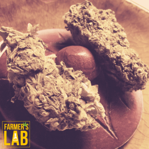 Marijuana Seeds Shipped Directly to Your Door. Farmers Lab Seeds is your #1 supplier to growing Marijuana in Wyoming.