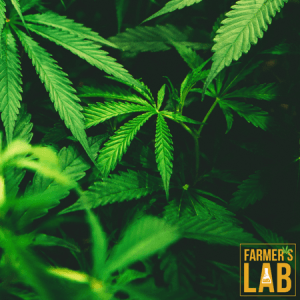 Weed Seeds Shipped Directly to Boisbriand, QC. Farmers Lab Seeds is your #1 supplier to growing weed in Boisbriand, Quebec.
