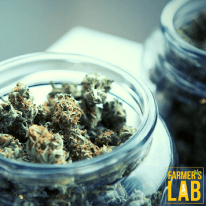 Weed Seeds Shipped Directly to Canton, GA. Farmers Lab Seeds is your #1 supplier to growing weed in Canton, Georgia.