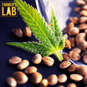Weed Seeds Shipped Directly to Chateauguay, QC. Farmers Lab Seeds is your #1 supplier to growing weed in Chateauguay, Quebec.