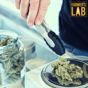 Weed Seeds Shipped Directly to Drummondville, QC. Farmers Lab Seeds is your #1 supplier to growing weed in Drummondville, Quebec.