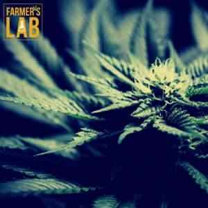Weed Seeds Shipped Directly to Edmonton, AB. Farmers Lab Seeds is your #1 supplier to growing weed in Edmonton, Alberta.