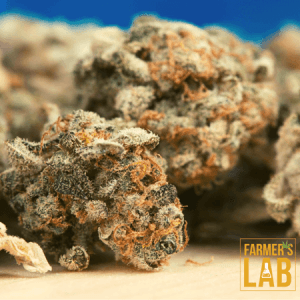 Weed Seeds Shipped Directly to Huron, SD. Farmers Lab Seeds is your #1 supplier to growing weed in Huron, South Dakota.