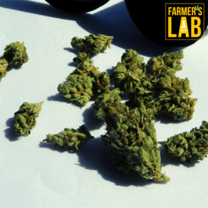 Weed Seeds Shipped Directly to Jackson, MS. Farmers Lab Seeds is your #1 supplier to growing weed in Jackson, Mississippi.