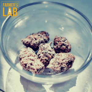 Weed Seeds Shipped Directly to Klamath Falls, OR. Farmers Lab Seeds is your #1 supplier to growing weed in Klamath Falls, Oregon.