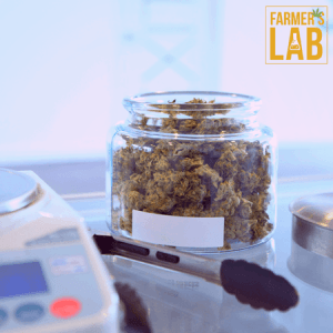 Weed Seeds Shipped Directly to Mississauga, ON. Farmers Lab Seeds is your #1 supplier to growing weed in Mississauga, Ontario.