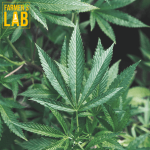 Weed Seeds Shipped Directly to Mobile, AL. Farmers Lab Seeds is your #1 supplier to growing weed in Mobile, Alabama.