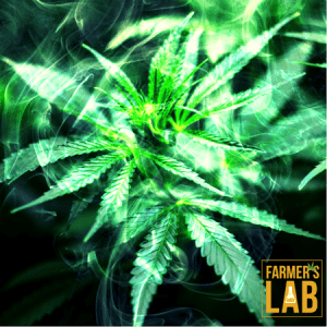 Weed Seeds Shipped Directly to Your Door. Farmers Lab Seeds is your #1 supplier to growing weed in North Dakota.