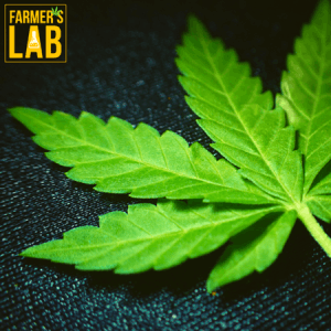 Weed Seeds Shipped Directly to Pine Bluff, AR. Farmers Lab Seeds is your #1 supplier to growing weed in Pine Bluff, Arkansas.